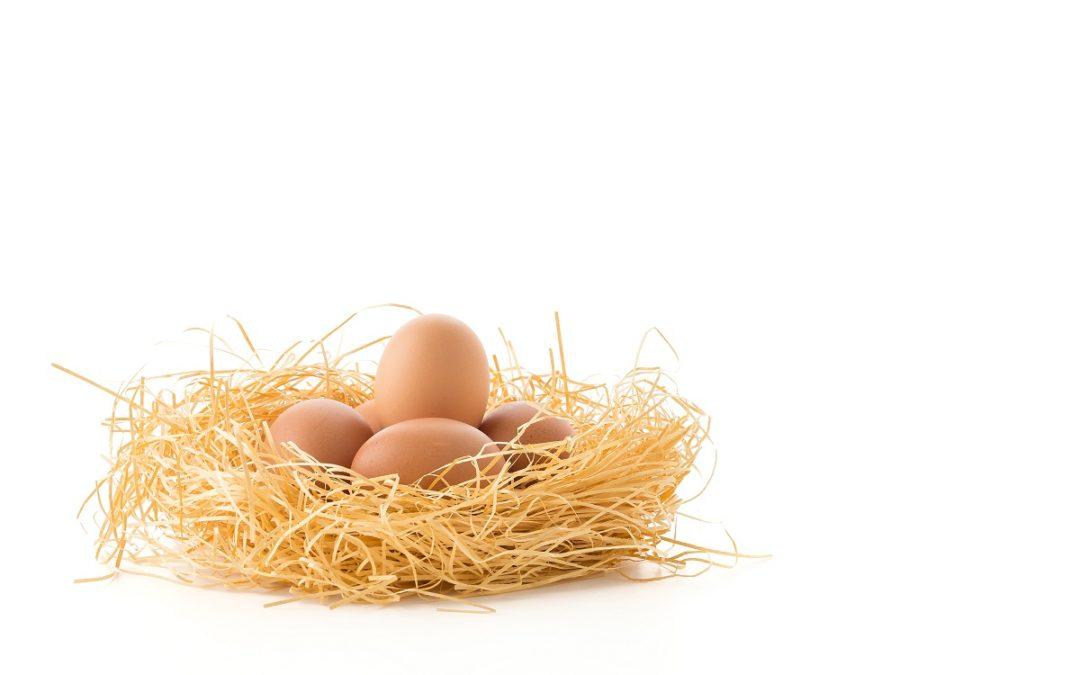 sve o jajima
